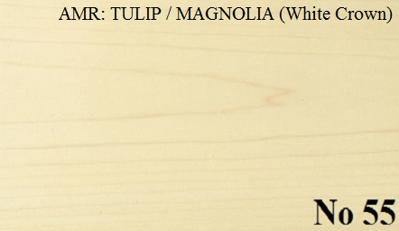AMERICAN TULIP - MAGNOLIA White Crown
